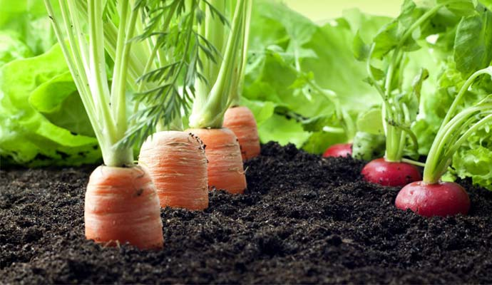 ozone-generator-for-agriculture