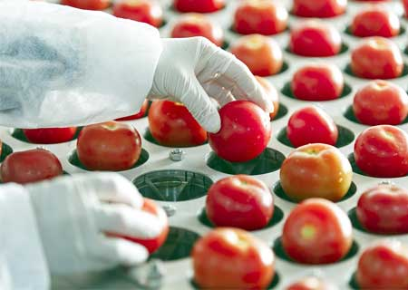 ozone-treatment-for-food-processing-industry